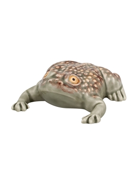 Picture of Toad - Large Toad 11