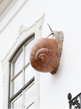 Picture of Giant Snail