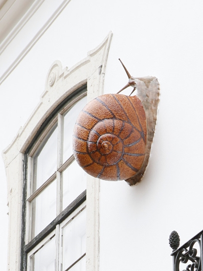 Picture of Snail - Giant Snail