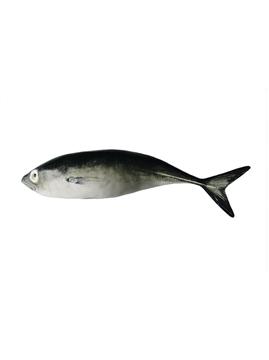Picture of Fish andShellfish - Jack Mackerel
